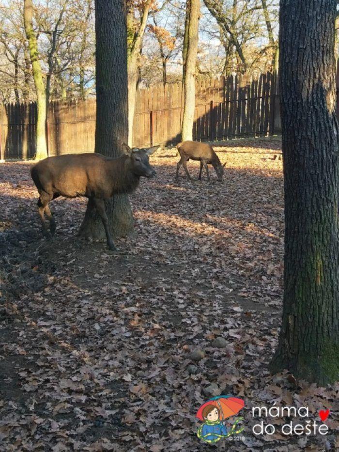 ZOO v Chuchelském háji: Srnky a jeleni.