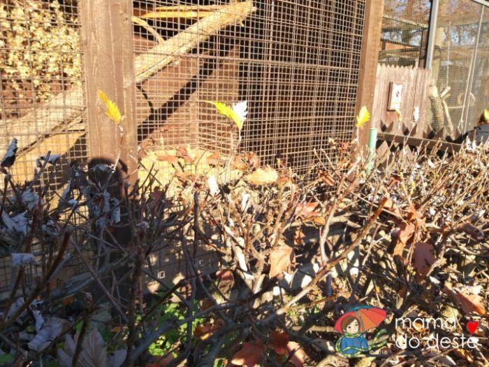 ZOO v Chuchelském háji: Od klecí se zvířaty dělí návštěvníky ještě živý plot.