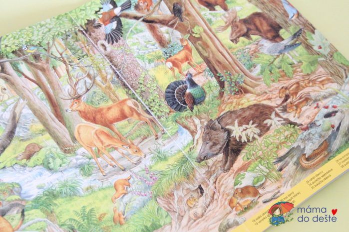 Recenze knihy Co se děje v přírodě (Anne Suess)