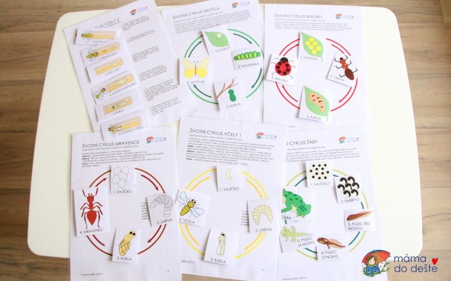 Pracovní sešit a karty Životní cyklus hmyzu + žába