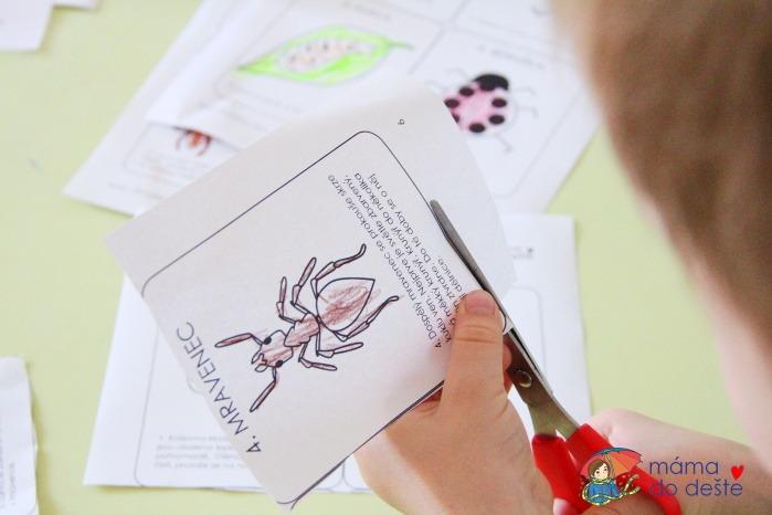Pracovní listy Životní cykly hmyzu + žába