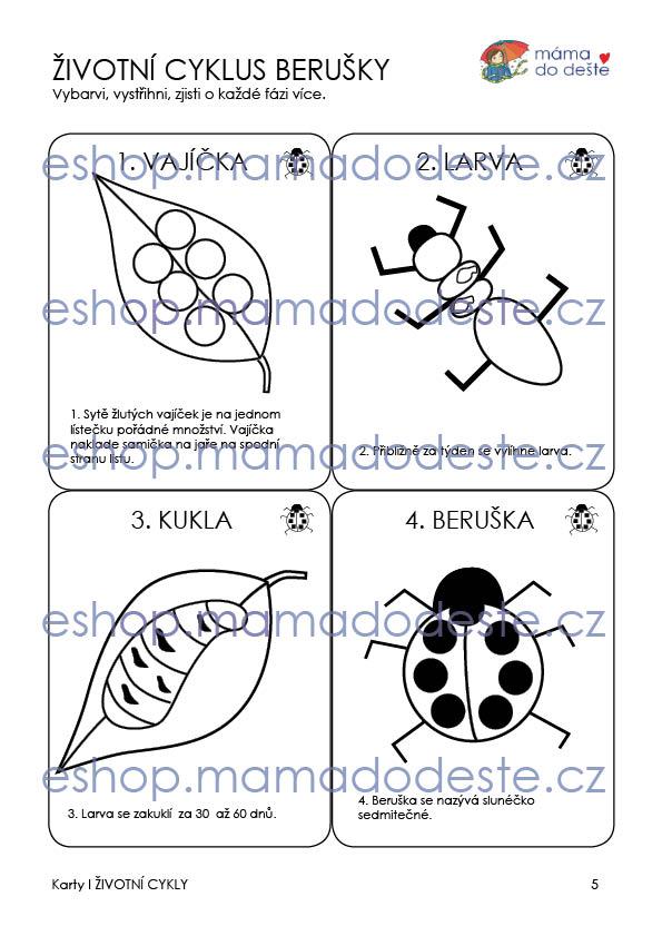 Životní cyklus karty OMALOVÁNKY2