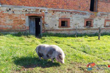 Za farmářskými výrobky aza zvířaty: Farma Bláto